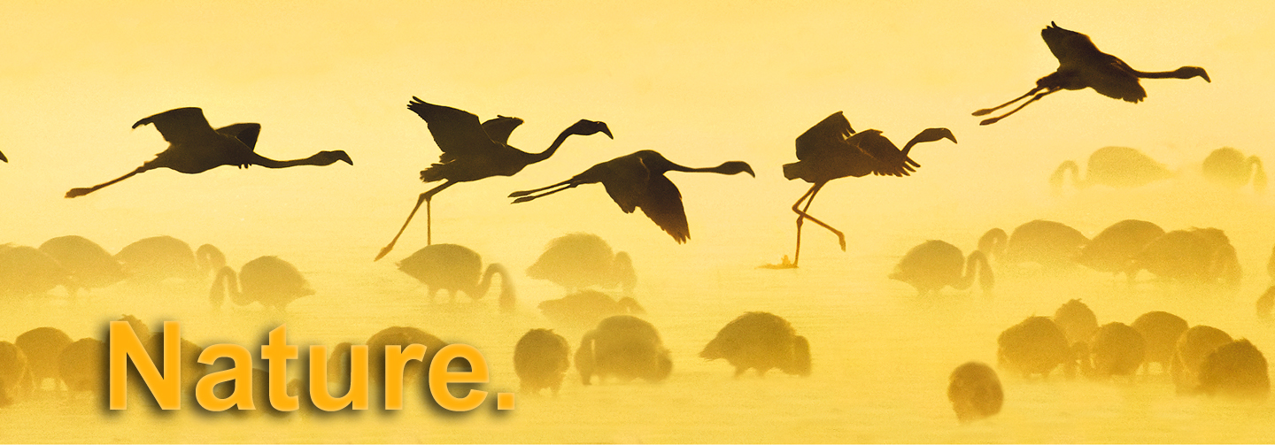 Enjoy stunning nature photogaphy in To the Ends of the Earth: Birds of East Africa